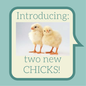 Introducing Vickie and Cynthia: Our Two Newest Chicks!